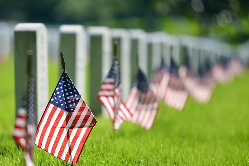 What are some options for my family to honor Veterans Day?